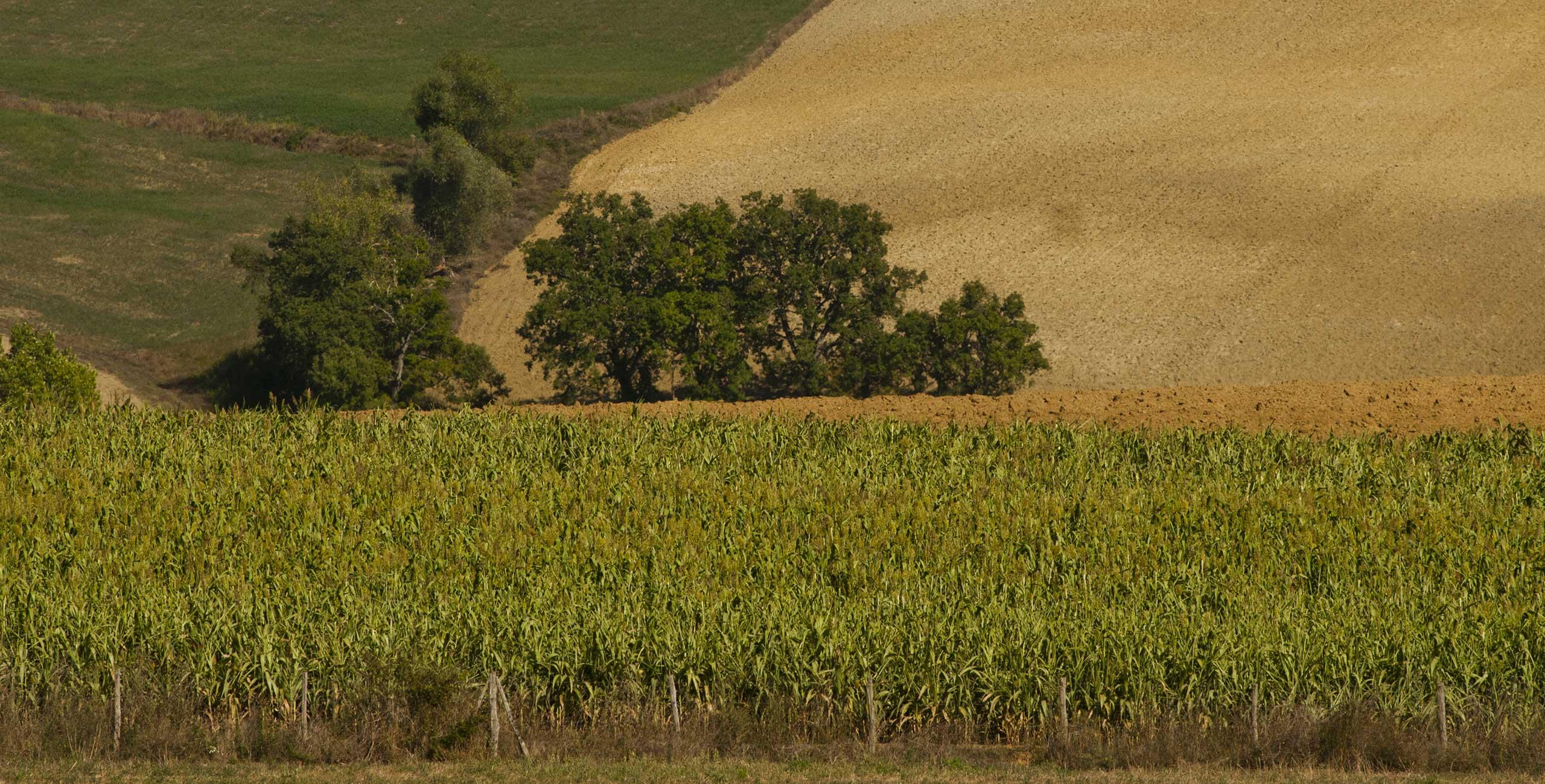 fattoria-mugello